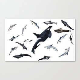 Dolphins all around Canvas Print