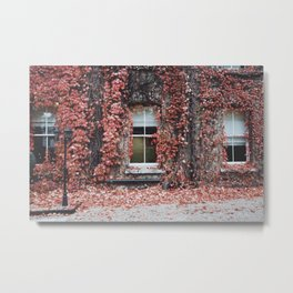 IVY - BUILDING - RED - LEAVES - WINDOW - PHOTOGRAPHY Metal Print