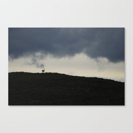 Vigilant guanaco Canvas Print