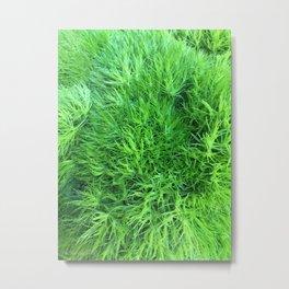 Dianthus Green Trick Metal Print