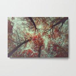 scarlet tree tops Metal Print