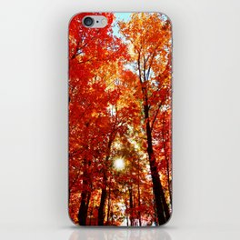 Sun in the Trees iPhone Skin