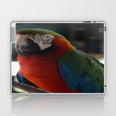 Parrot Talk Laptop & iPad Skin