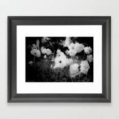 Poppy Bloom Framed Art Print