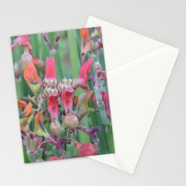 Succulent Array Stationery Cards
