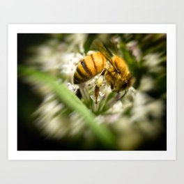 Pollen and a Bee. Art Print