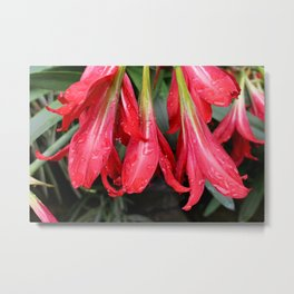 Dying Flowers Metal Print