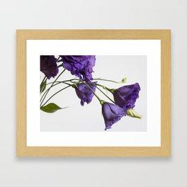 Purple Lisanthus Flowers #2 Framed Art Print