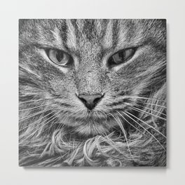 Silver Kitty no.2 Metal Print