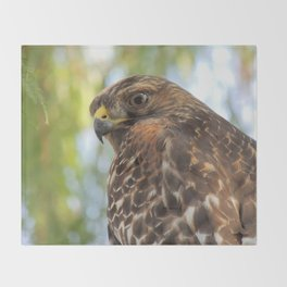 Young Red-Shouldered Hawk in a Desert Willow Throw Blanket