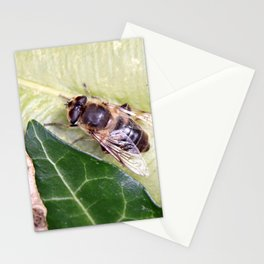 Drone or Hover Fly Stationery Cards