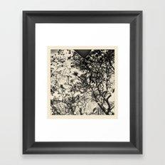 magnolia +2 Framed Art Print