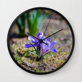 Springtime Crocus in Warsaw Wall Clock