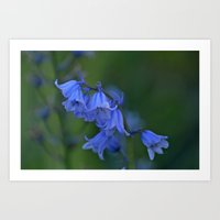 spanish Art Prints featuring Spanish Bluebells by Steve Watson