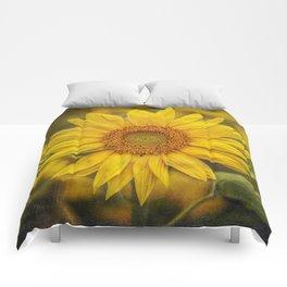Solo Comforters