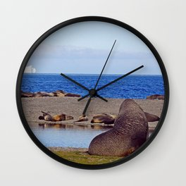 Fur seals with iceberg in the distance Wall Clock