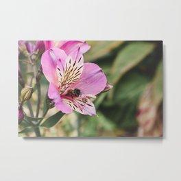 Sweet Pollen Metal Print