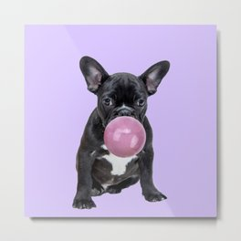 Pug with bubble gum Metal Print