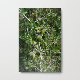 Autumn fresh acorns in the wild forest Metal Print