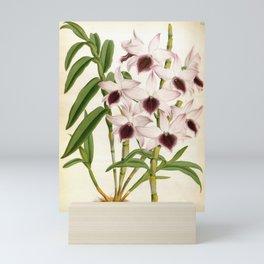 Dendrobrium Ainsworth Roseum Vintage Lindenia Orchid Mini Art Print