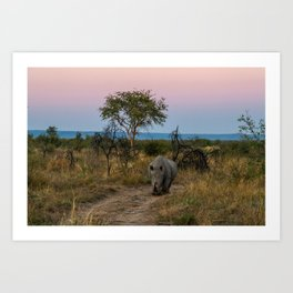 A Rhinoceros and a Sunrise in South Africa Art Print