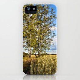Corn Field with Birch Trees iPhone Case