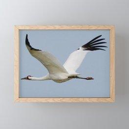 Whooping Crane on the Wing Framed Mini Art Print