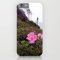 Pink Wild Rose, Gravels Park, Newfoundland iPhone 6s Slim Case