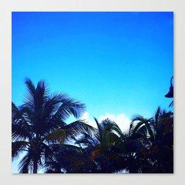 Vieques Palm Trees Canvas Print