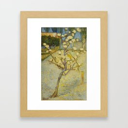 Small Pear Tree in Blossom Framed Art Print