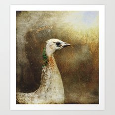 White Peacock Art Print