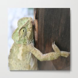 Green Chameleon Holding On To A Shed Door Metal Print