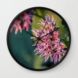 Showy Milkweed Wall Clock