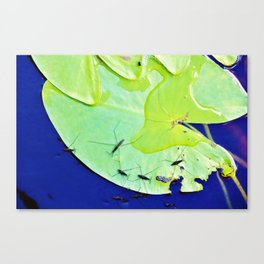 Water striders on lily pad Canvas Print