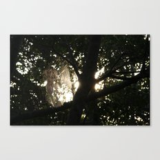 Webs in the mangrove Canvas Print