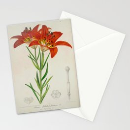 Lilium philadelphicum Vintage Botanical Floral Flower Plant Scientific Stationery Cards