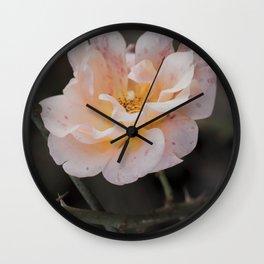A winter rose Wall Clock