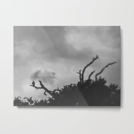 106 | austin Metal Print
