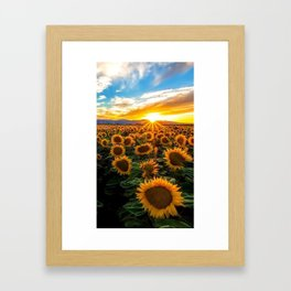 Morning sun flowers Framed Art Print