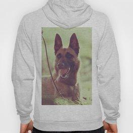 Malinios Beauty dog picture Hoody