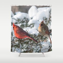 Sunny Winter Cardinals (square) Shower Curtain
