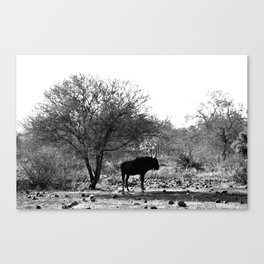 Wildebeest Silhouette in Black and White Landscape Photography Canvas Print