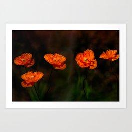 Wild Poppies Art Print