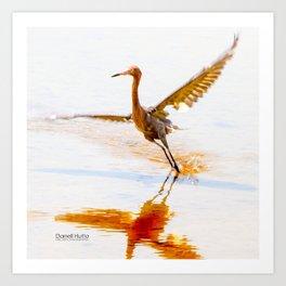 Reddish Egret 6 by Darrell Hutto Art Print