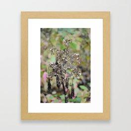 Dead Summer Plant Framed Art Print