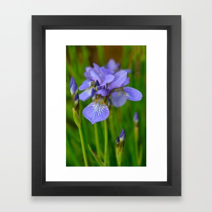 Siberian Iris by Teresa Thompson Framed Art Print