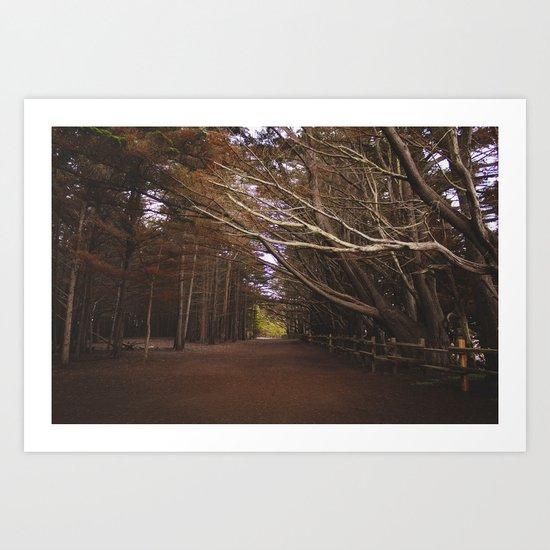 Light Fall Art Print