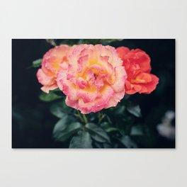Roses II Canvas Print