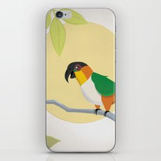 Black-Headed Caique Parrot iPhone & iPod Skin