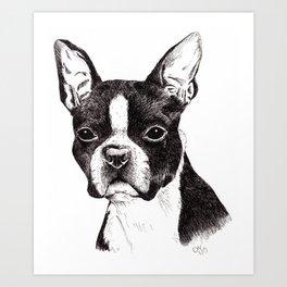 Boston Terrier Portrait Art Print
